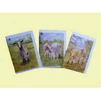 Blank greetings cards 1